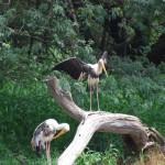 Telugu Names of Birds